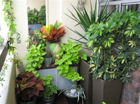 apartment plants ideas and interior small spaces balcony garden