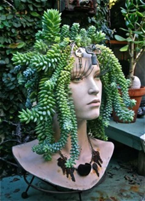 medusa planter 10 ways to showcase succulents you never thought of info