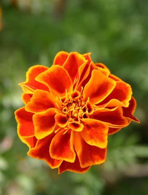 imagenes de rosas solas elyelmo