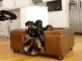 Luxury Dog Beds & Designer Dog Sofas as seen on The Apprentice   Scott's of London