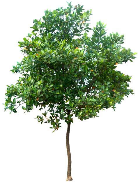 green leaves png image veerendra vijaya pinterest 20 free tree png images artocarpus heterophyllus02l