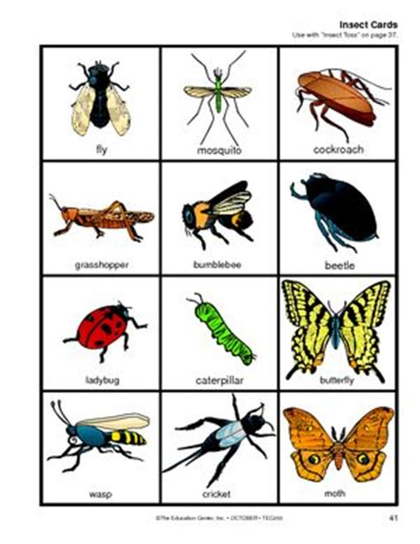 printable insect flash cards 17 best images about insects on pinterest bingo pocket