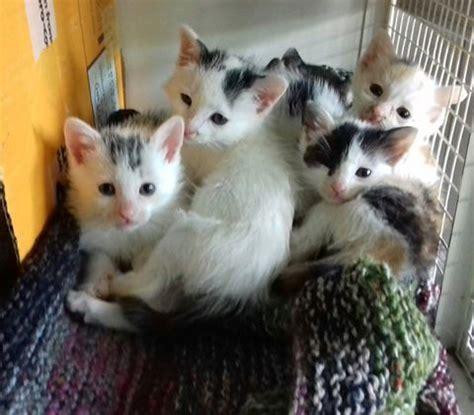 protezione animali pavia voghera 19 10 2016 emergenza cibo per i gattini