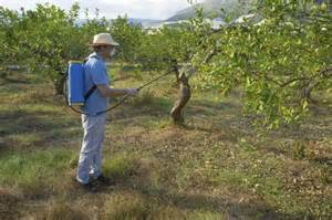 spraying fruit trees how to spray fruit trees with dormant ehow