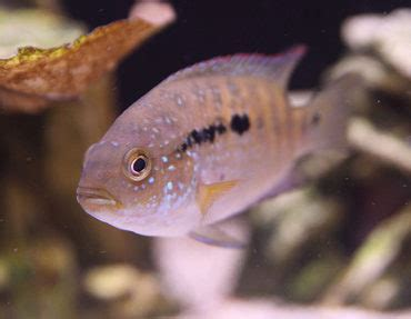 aquascaping tips aquascaping tips to reduce aggression in fish ratemyfishtank com