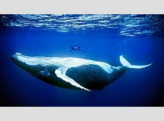 Wacky Weekend: Upside-Down Animals Just Keep Swimming