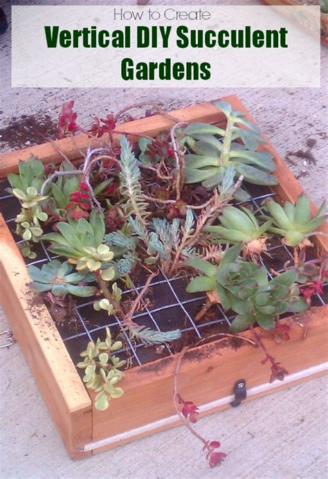 How To Make A Vertical Garden With Succulents How To Create A Vertical Hanging Succulent Garden