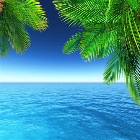 immagini gratuita paesaggio estivo con palme scaricare foto gratis