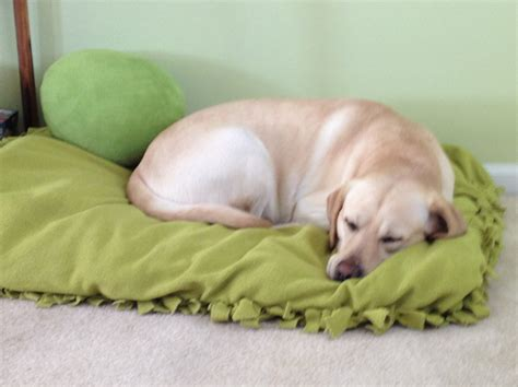 cheap n easy dog bed diy diy no sew doggy bed or floor pillow tips n giggles