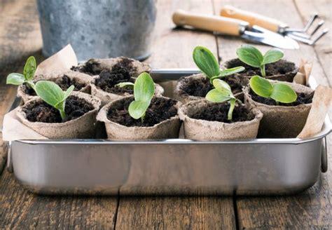 Garten Was Wann Pflanzen 4368 by Pflanzen Selbst Ziehen Obi Gibt Hilfreiche Tipps