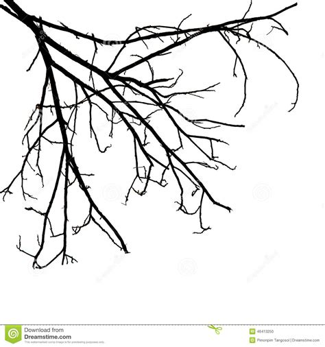Decorative Chalkboard Tree Branches Isolated On White Background Stock Photo