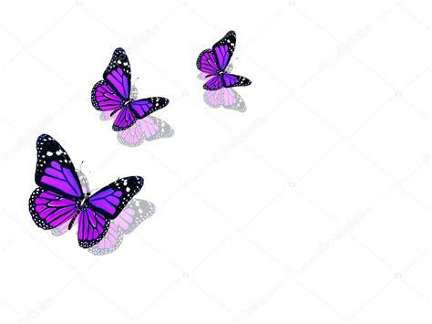 imagenes de mariposas lilas hermosas mariposas violetas fotos de stock 169 lovart