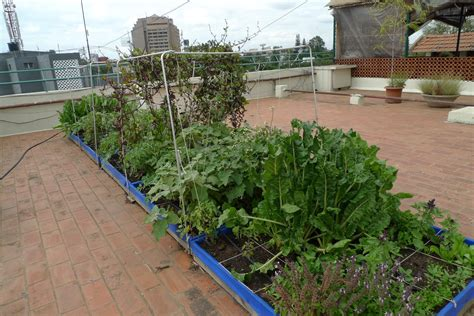 Want To Keep Your Home Cool This Summer An Architect Has Vegetable Garden On Terrace India