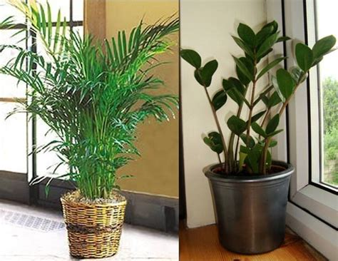 good houseplants for dark rooms 4 indoor plants for dark rooms lifeberrys com