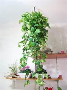 Plant Baskets Design » Ideas Home Design