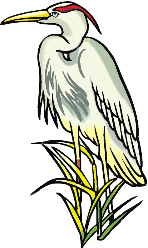clipart to for free egret clip cliparts