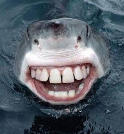with teeth sharks with human teeth