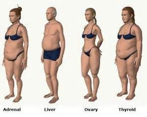 body types and fat distribution mckinnon sam pinterest