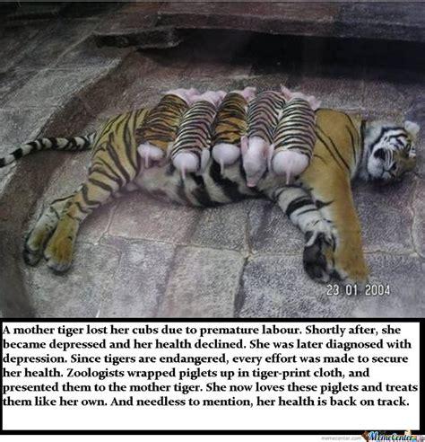 Tiger Mom Meme - tiger mother by ben meme center