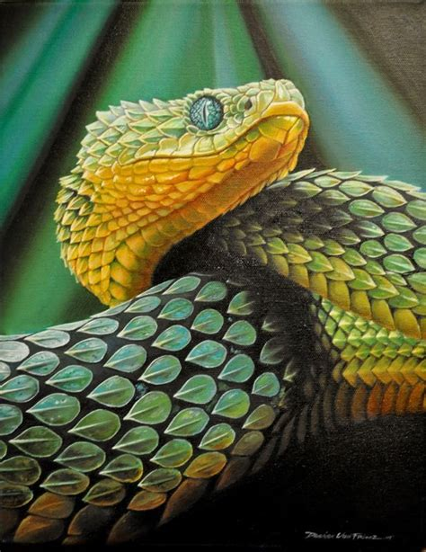 design pattern viper painting of an african bush viper snakes pinterest