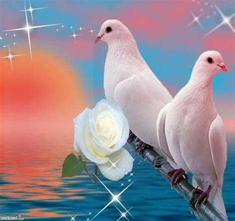 orsi cornici loving memory by horror02 imikimi colombe