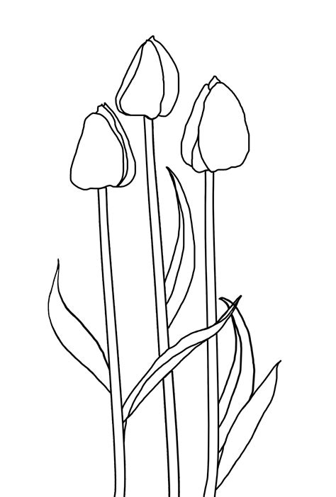 tulip leaf coloring page coloring pages free 3d textures