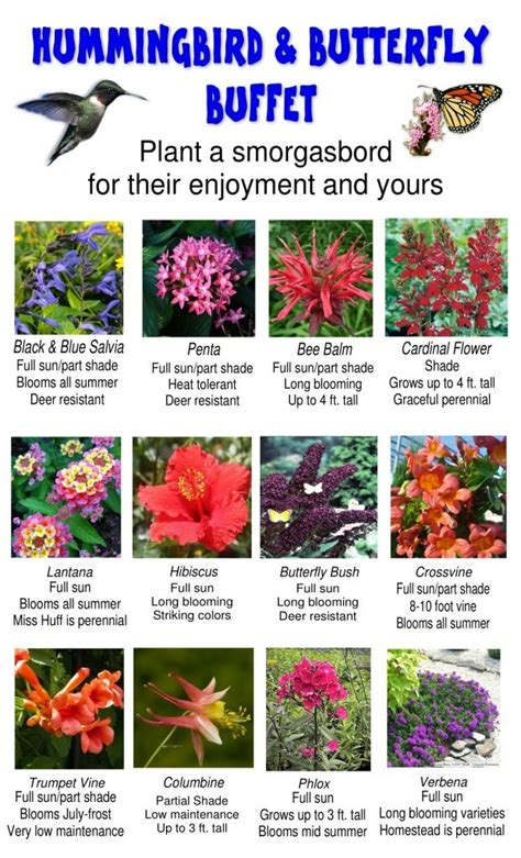 attracting butterflies and hummingbirds to your backyard 12 plants to attract hummingbirds and butterflies