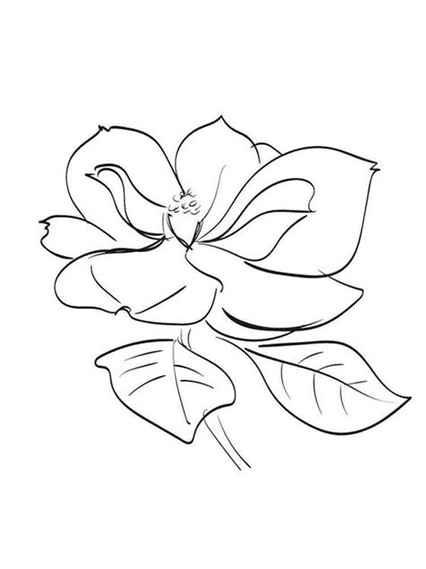 printable magnolia flowers magnolia coloring pages download and print magnolia