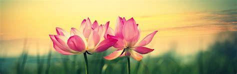 lotus flower cover photo lotus flower cover photo choice image flower decoration