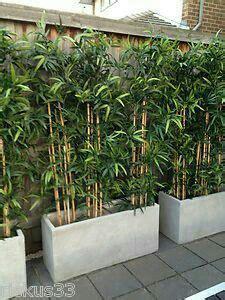 Palme Für Garten by Bambus Sichtschutz Garten Terrasse Garten Sichtschutz