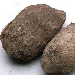 Root Vegetables Pictures And Names - name root
