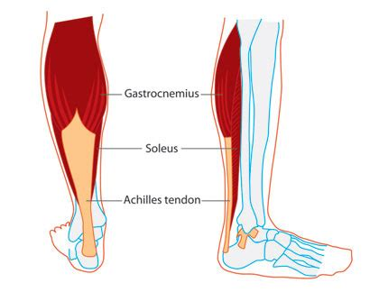 What Causes Leg Crs At In Bed by Calf Twitching And