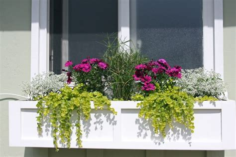 window boxes for plants window boxes revived 187 designed on
