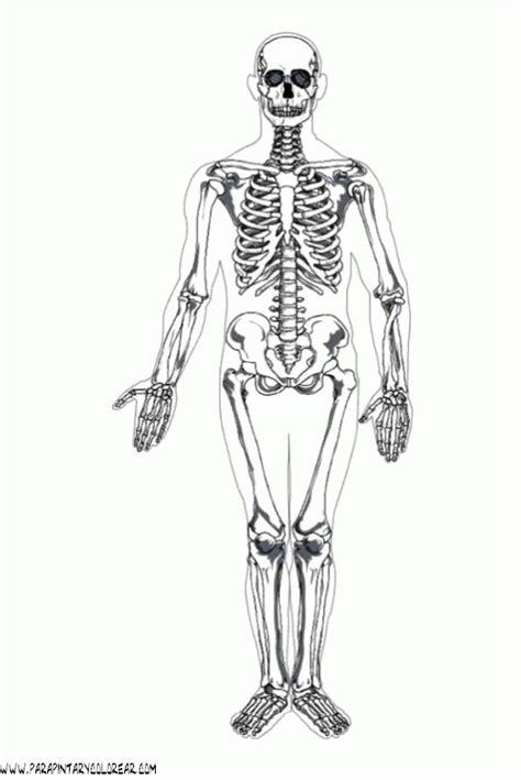 Collection of Dibujos De Esqueleto Humano Para Colorear Huesos ...