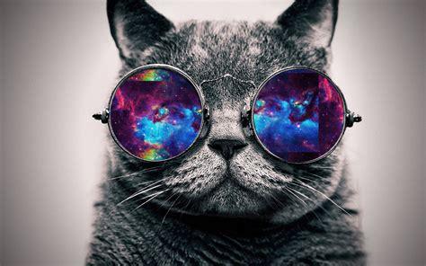 Wallpaper Galaxy Cat | the cool cat fxp