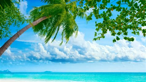 exotic summer day high definition wallpapers hd wallpapers