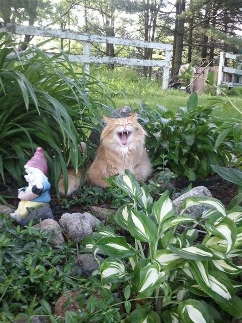 images  gardening humor  funny