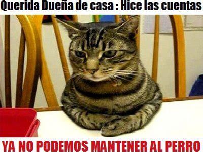 imagenes chistosas de animales con frases animales con frases graciosas meme humor and memes
