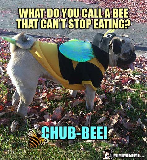 pug bee sting pug bee jokes pug in bee costume humor meme pg 5 mimimememe