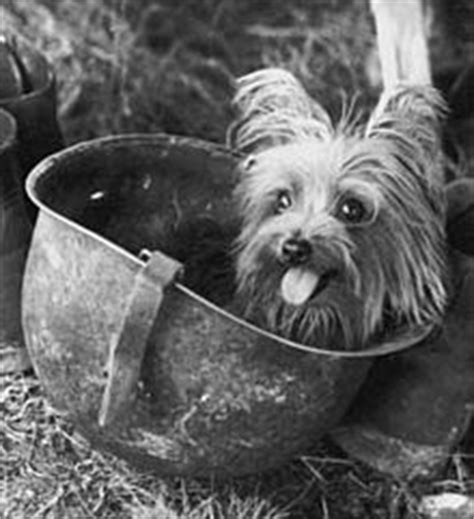 smokey the yorkie woof chapter 1 brandywine421 marvel cinematic universe archive of our own