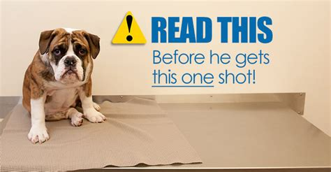 leptospirosis vaccine for dogs the risks