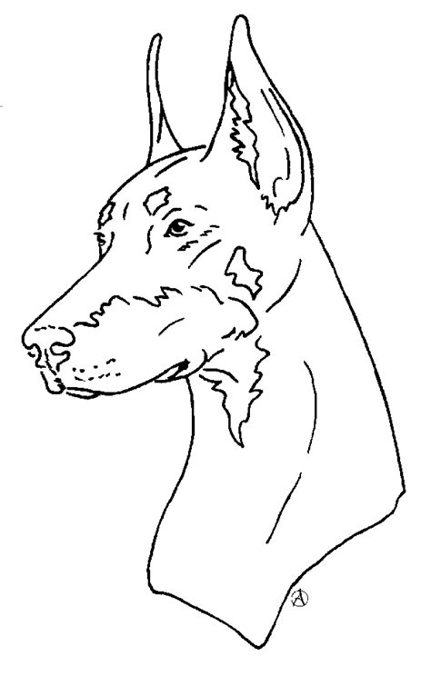 free how to draw a doberman coloring pages