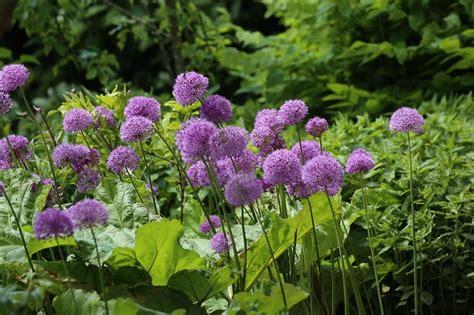 flower garden tips flower and garden tips flower and garden tips