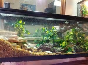 fire belly newt with goldfish terrarium tank aquarium pinterest love it the o jays and