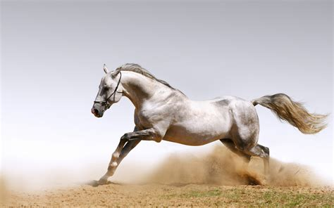 wallpaper horse free download 44 animals horse wallpapers download