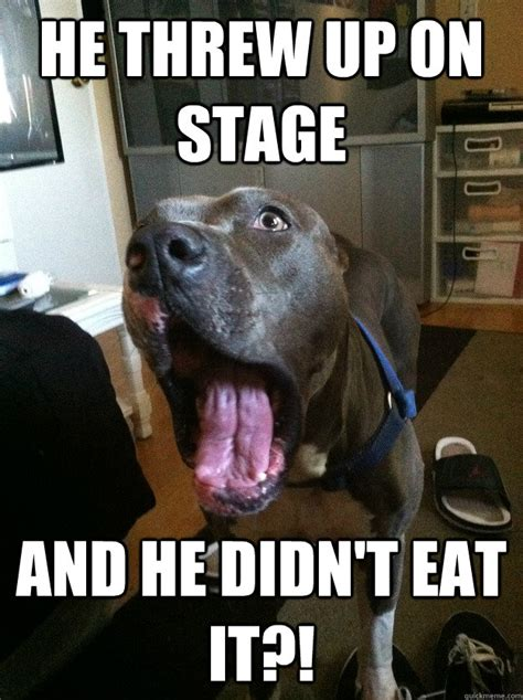 Shock Meme - shocked dog meme www pixshark com images galleries