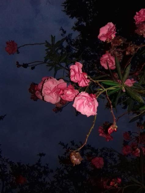Imagenes De Amor Con Flores Tumblr | flores foto tumblr