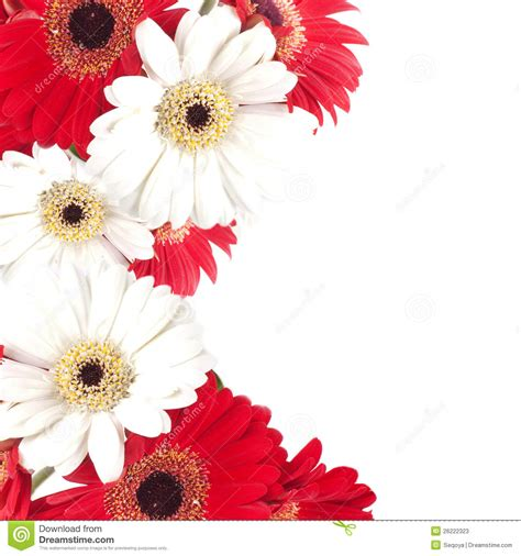sognare fiori bianchi fiori bianchi e gpsreviewspot