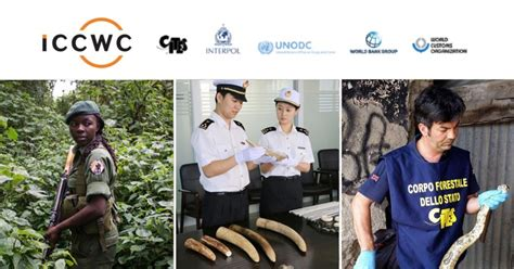fight against wildlife crime gets a usd20 million boost
