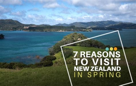 7 Reasons To Go On Vacation To Florida by 7 Reasons To Visit New Zealand In Castaway With